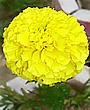 Asahikawa Flower.