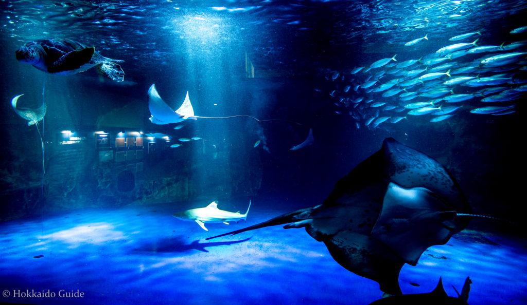 พิพิธภัณฑ์สัตว์น้ำโอตารุ (Otaru Aquarium) – Hokkaido Guide