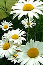 Muroran Flowers.