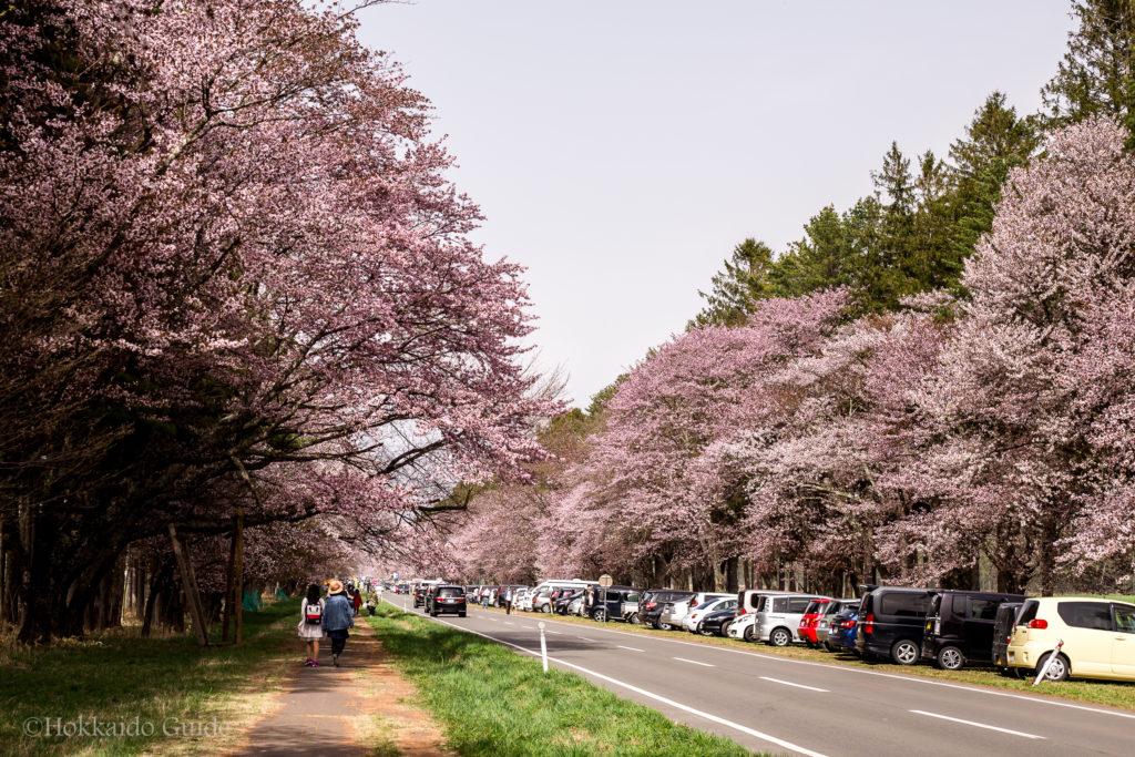 Shizunai Nijukken Road