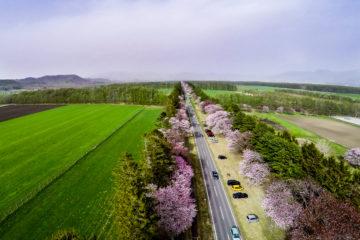 Permalink to:Shizunai Cherry Blossom Festival