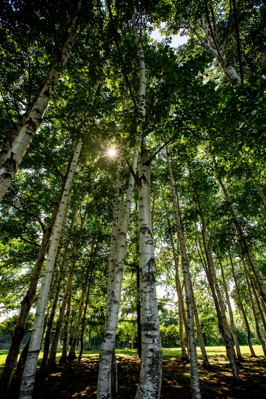 Woods at Hitsujigaoka Observation Hill