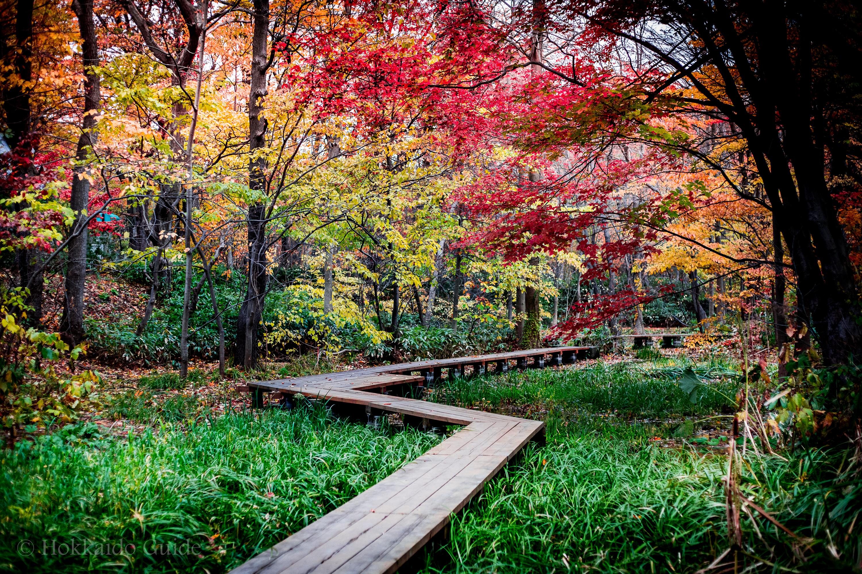Hokkaido University Botanical Gardens Garden Ftempo