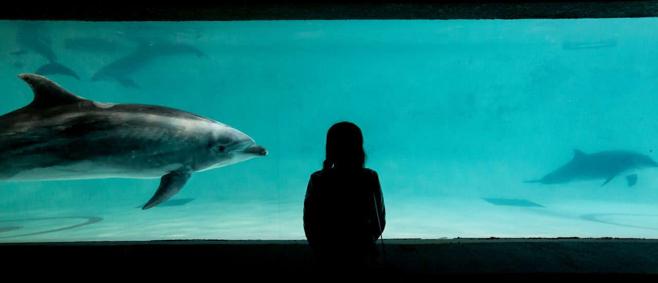 พิพิธภัณฑ์สัตว์น้ำโอตารุ (Otaru Aquarium)