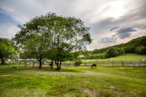 Ecorin Village farm